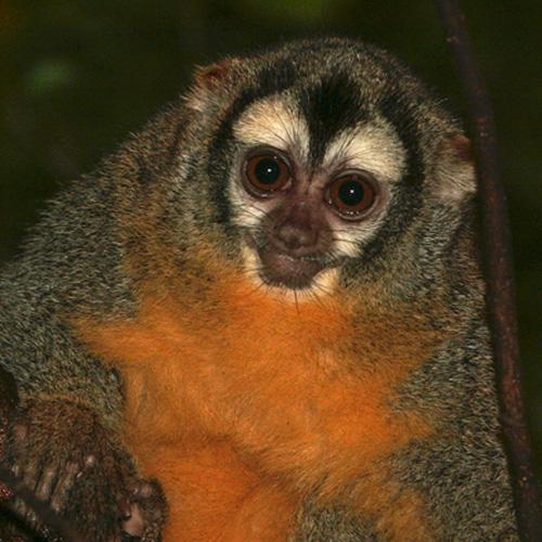 night-monkey.jpg