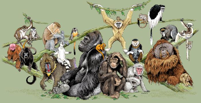 primates_tree