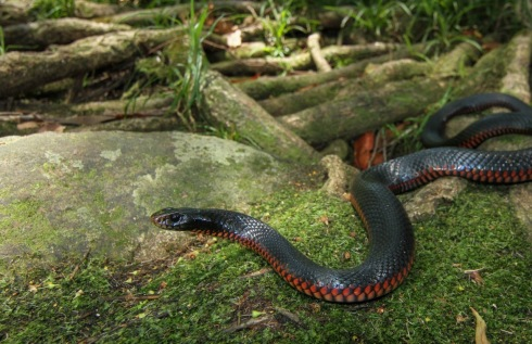 snake | ferrebeekeeper