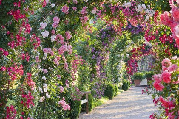 spectacular-rose-gardens-designs-arch-of-roses.jpg