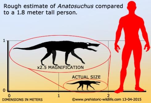 anatosuchus-size