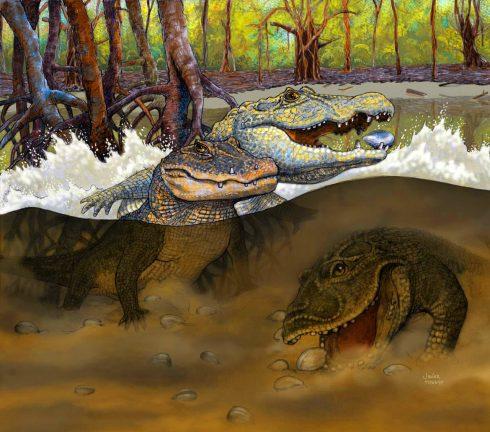 image_2536_1e-Miocene-Crocodiles