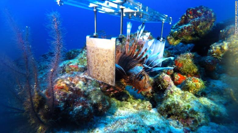 160916180325-lionfish-paddle-exlarge-169