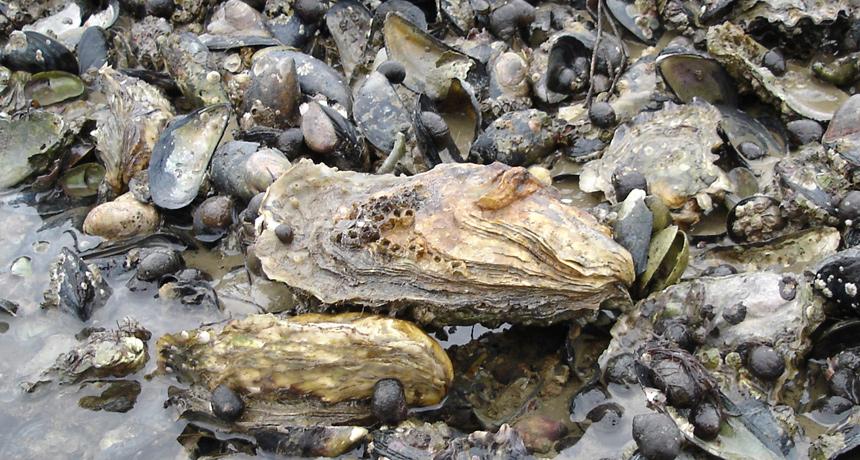 oyster-004.jpg