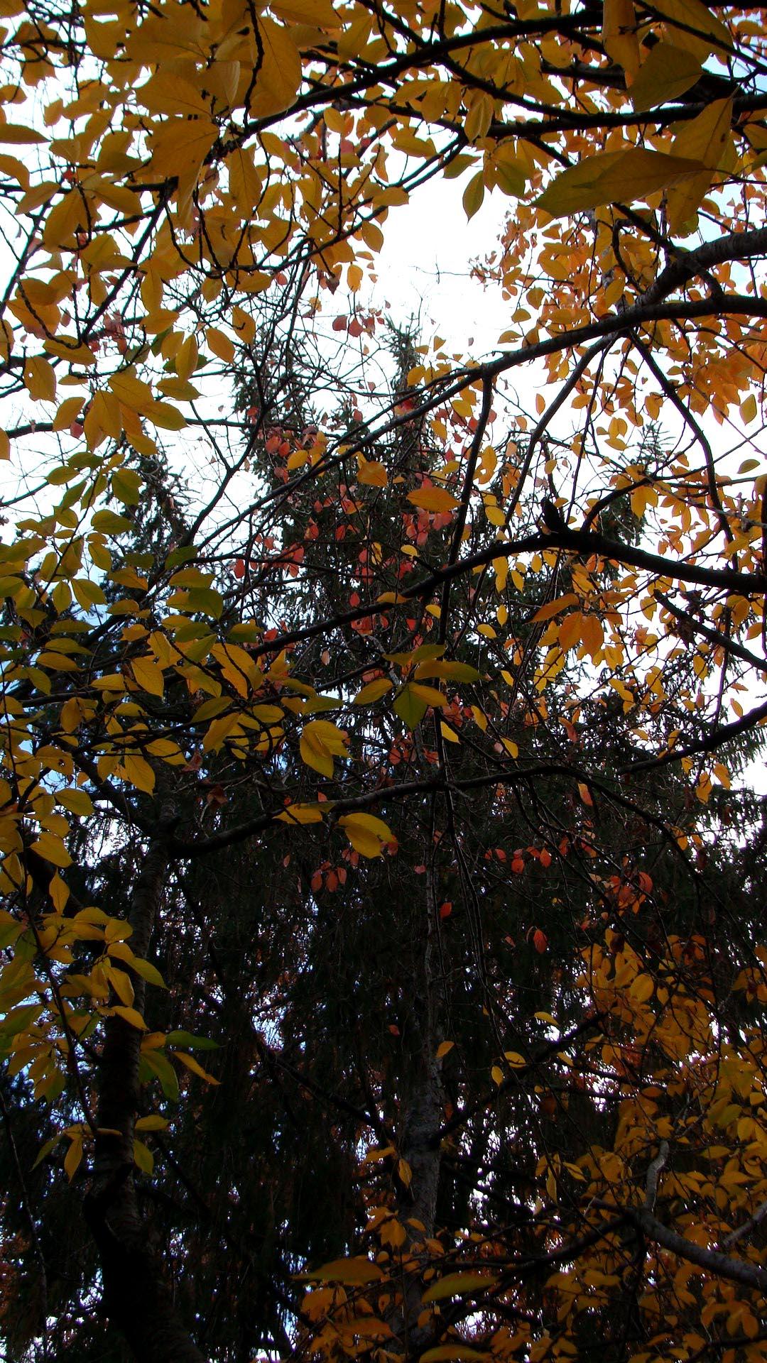 Autumn3.jpg