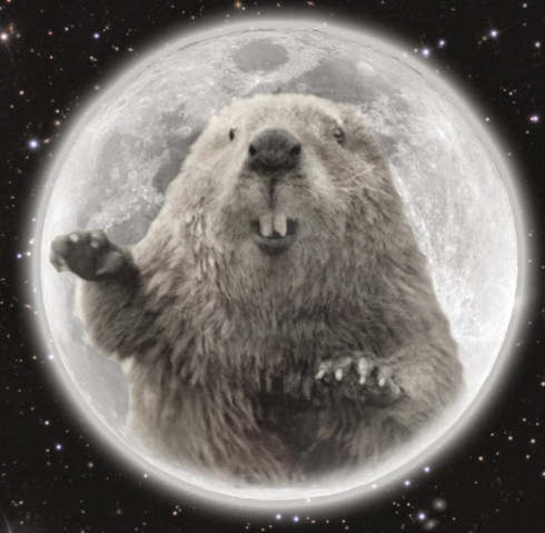 "November's Spectacular Full Moon Rising - Don't Miss The ""Full Beaver Moon"" Full-beaver-moon"