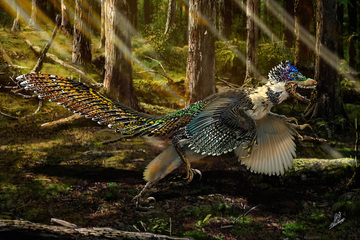 feathers-dinosaur-2-art.jpg