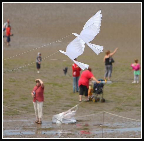 Dove kites-9794.jpg
