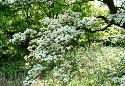 flowering bonsai (15).jpg