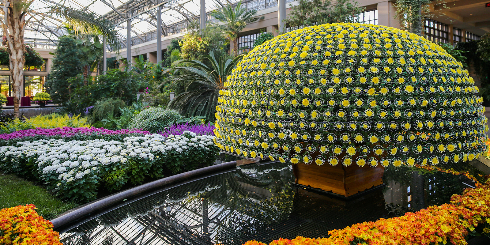316378_Chrysanthemum-Festival_Mathias_-Becca-_header_1.jpg