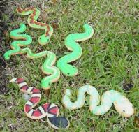 Snake Cookies 066