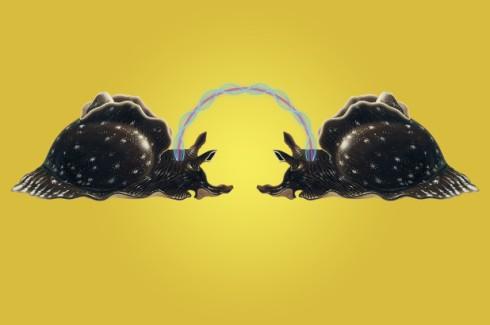 180515-mind-transfer-snail-feature.jpg