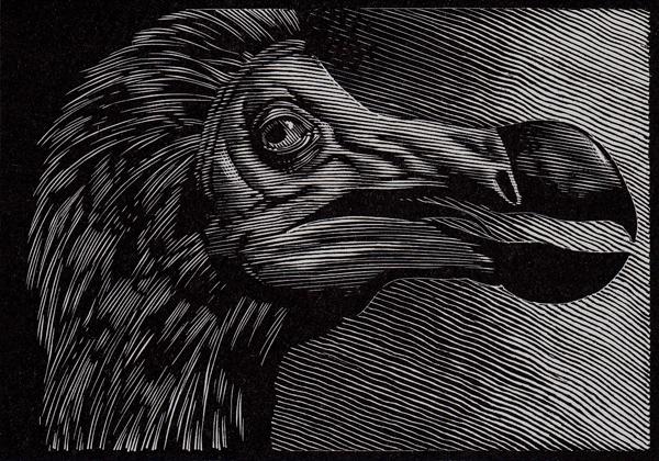 dodo-3x4.jpg