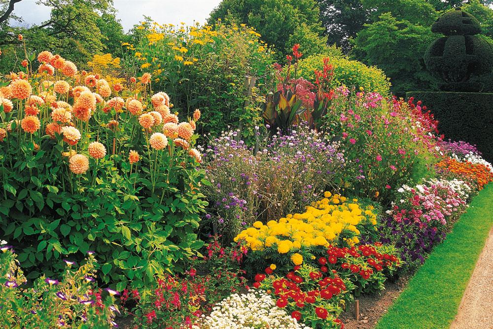 g-flowers-and-plants-grow-a-summer-garden-dec14jan15-p182-composition.jpg