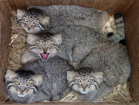 46e0fa7277e5e752dd47fed52b632ec5--wild-animals-baby-animals