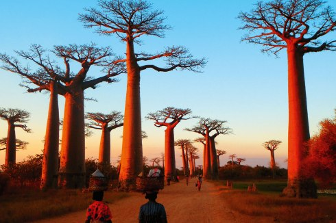 Baobab-Alley.jpg