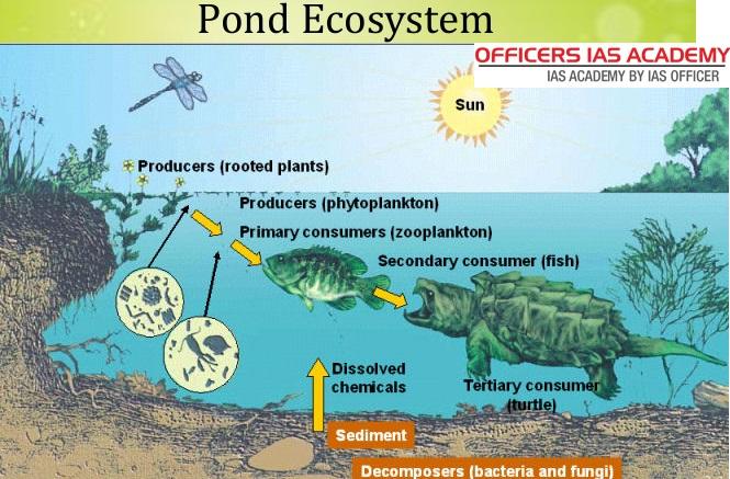ecology-ecosystems-65-638.jpg
