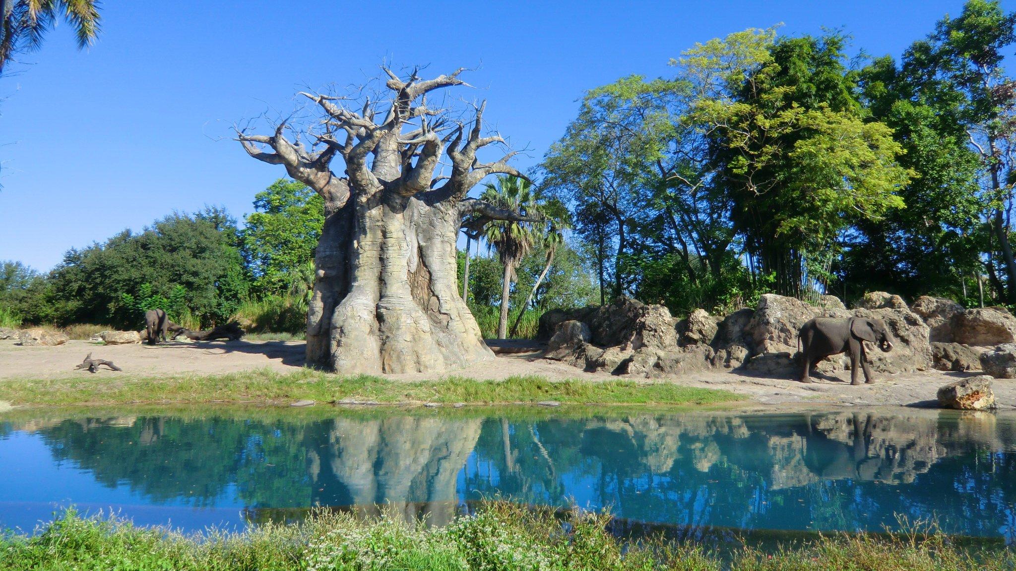Tree-02.jpg