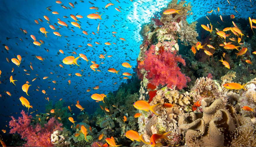 what-is-the-biology-and-ecology-of-the-coral-reef.jpg