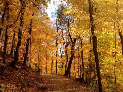 frick-park-fall-foliage-78e404a997a217dd.jpg