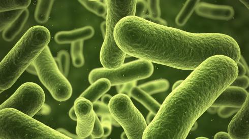 114545_bacteria_istock_000062629194_large.jpg