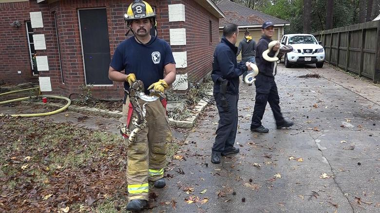 181211110443-firefighters-rescue-snakes-02-exlarge-169.jpg