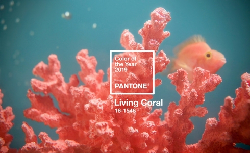 pantone-color-of-the-year-2019-living-coral.jpg