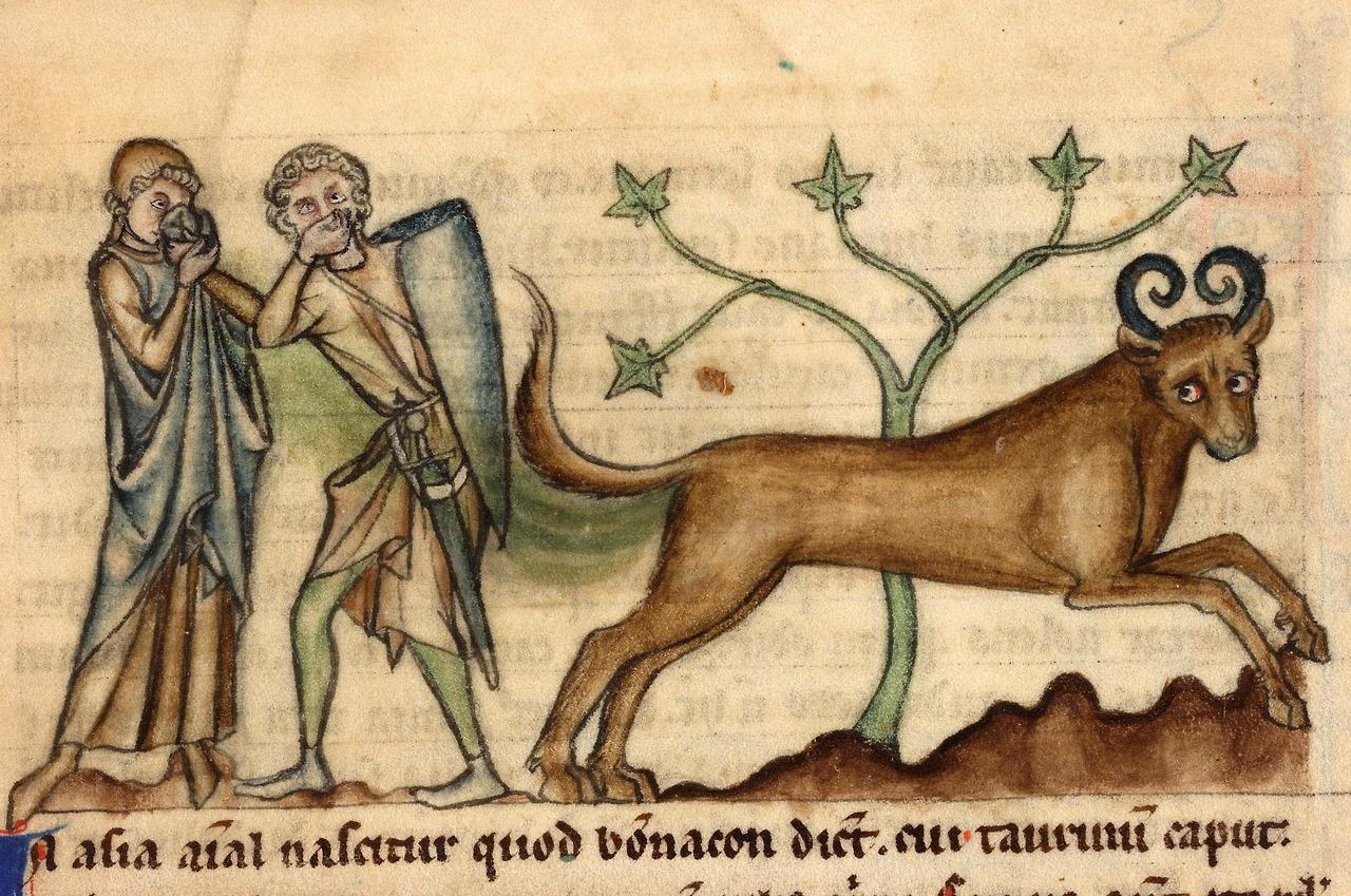Bonnacon-Medieval-Monster-surprise.jpg