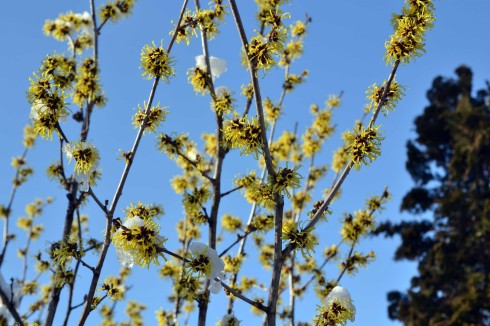 witch-hazel_EP_24746369201.jpg
