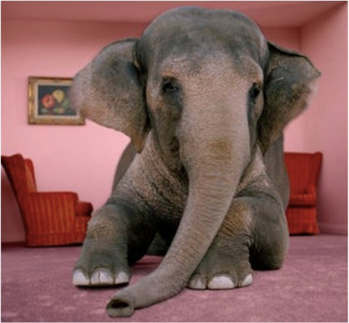 elephant-in-room.jpg