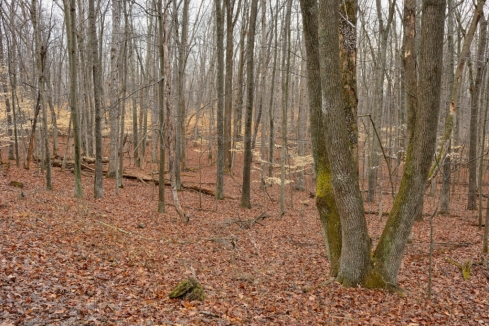 american-beech-trees-04012013-banshee-reeks-c-jim-clark_1.jpg