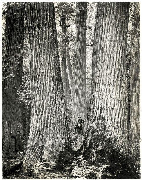 1-chestnut-historic-photo-1910