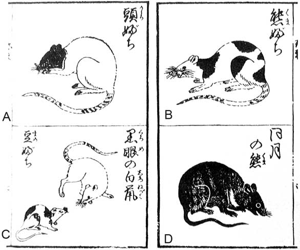 Fig-2-The-figures-from-Chingan-sodate-gusa-published-in-1787-Various-types-of