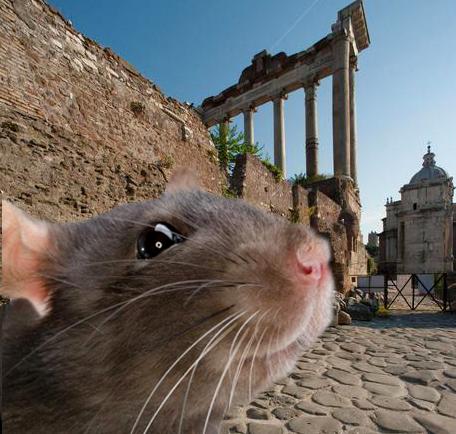 Rats_Rome_01b