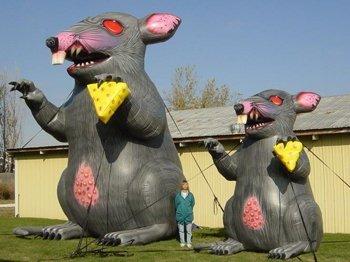 rats_5-350x262