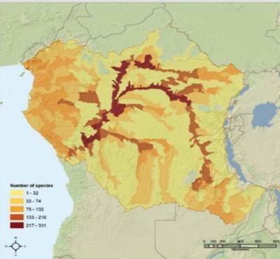 Congo-2-400x369