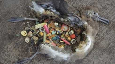 default-1464367250-2119-seabirds-are-eating-plastic-litter-in-our-oceans-but-not-only-where-you-d-expect
