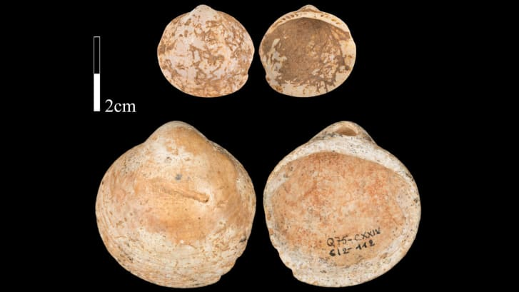 http _cdn.cnn.com_cnnnext_dam_assets_200708131335-ancient-humans-shell-necklaces